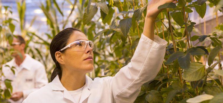 Nachhaltigkeit bei BASF